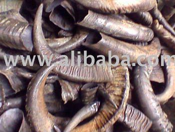 Water Buffalo Horns