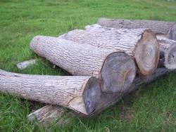 Camphor Laurel Logs