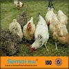 galvanized hexagonal chicken wire mesh(anping factory)
