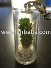 BABYTREE, MINI PLANT, BABY PLANTE, POCKET TREE, PET TREE, MINI CACTUS, PET PLANT, MOBILE CHARMS, KEY CHAINS,