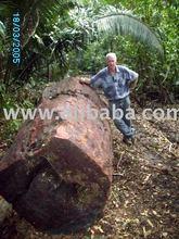 De edad crecimiento Honduras de caoba