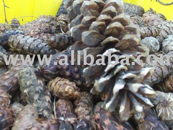 NW Pine Cones, Fir Cones