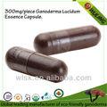 50% shell reishi- broken spore + 50% poudre d'extrait de capsules
