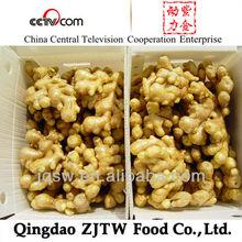 China New Season Fresh Ginger Mesh Bag Packing