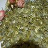 Fresh pumpkin seeds kernels (GWS) on sale