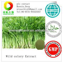 Celery Extract/Apium graveolens extract/ Apigenin/butylphthalide