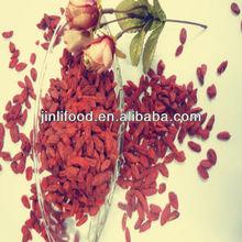 Supply fresh/dried Goji Berry/organic Gojiberry