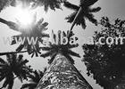 Palm trees in Rio de Janeiro