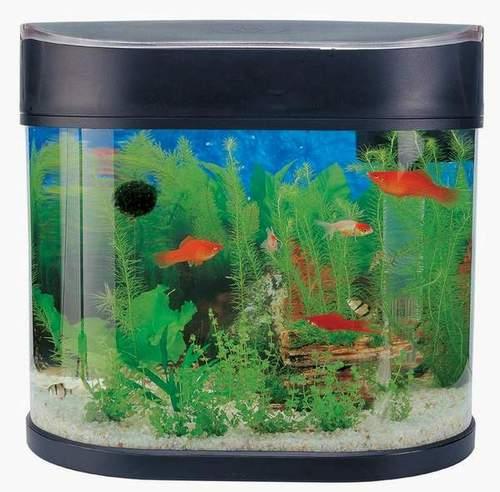 Aquarium supplies india aquarium starter kit sun swirl for Fish tank price