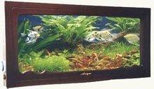 Wall Mounted Aquariums C