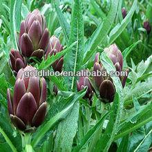 Organic/HALAL/ISO9001/GMP/cGMP/ herb extract /Artichoke Extract/ Cynarin 5%10:1 / HPLC/UV
