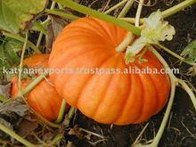 New Pumpkin Seed Essential Oil