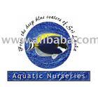 Marine fish, Shrimps, Invertebrates & Fresh water fish