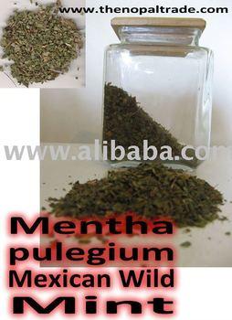 Mexican Wild Mint ( poleo or Mentha pulegium)