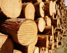 round logs sawn timber lumber pine spruce and fir