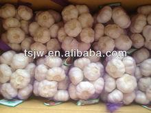 shandong garlic price of sale