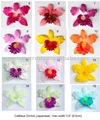 """Flor cabeça japonês cattleya orquídea 9.5 cm ( 3.5 """" )"""