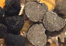 Fresh Truffles (Tuber uncinatum)