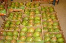 Whole Fresh Mango Kent from Peru