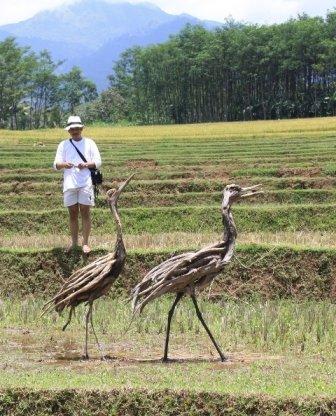 Driftwood Root Cranes