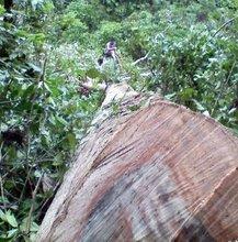 Timber : mahogany, kamagong(ironwood), gmelina