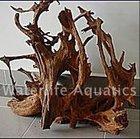 Mangrove, driftwood