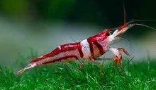 LIve Tropical Fish, Invertebrate & Aquatic Plant
