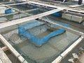 Jaula de la red de la larva de los pescados y del camarón