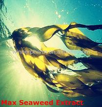alghe concime ascophyllum nodosum