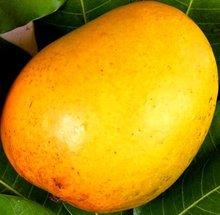 Mango Pulp - Alphonso / Totapuri