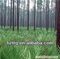 Hot sale saw palmetto Extract