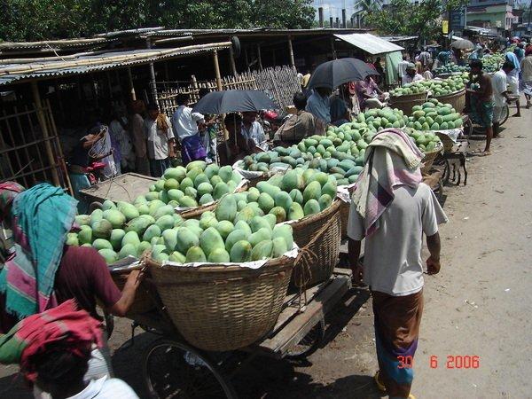نقي بنجلاديش مانجو