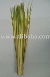 Long Double Strip Palm