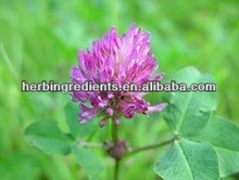 GMP & ISO9001 Natural 100% Red Clover Extract
