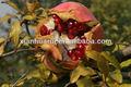 süß granatapfel