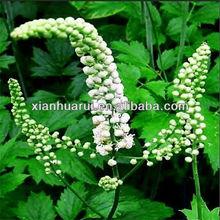 black cohosh triterpene saponine