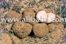 Fresh wild Truffles