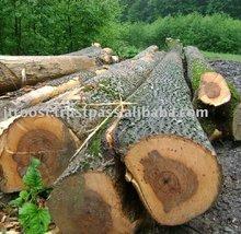 European Lumber Ash White Wood Logs