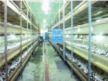 Shelves For Mushrooms Growing