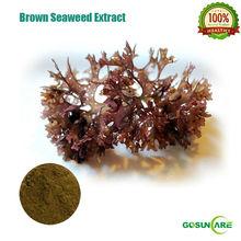 Soluble Brown Seaweed Powder brown seaweed extract