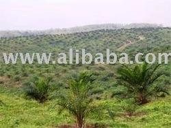 Dijual Perkebunan Kelapa Sawit dan pabriknya 20,000 hectare di Propinsi KALIMANTAN BARAT INDONESIA