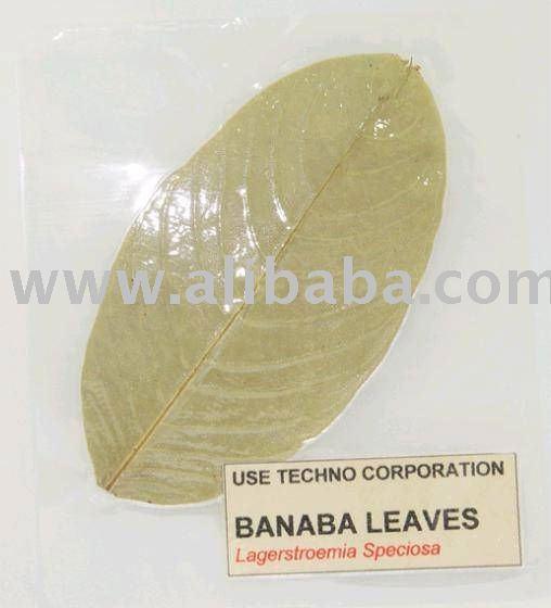 Feuille de Banaba [pour l'usage du thé, de l'extrait]