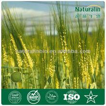 Green Barley Grass Powder for juice