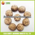 Xixia jiushunda mantarlı mantarlı kuru