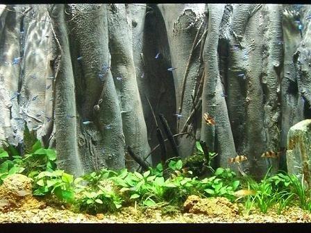 Super Realistic 3D Aquarium Background