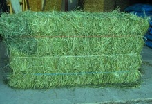 #3003 3 String #1 Premium Western Timothy 1st Cut Hay (non compressed)