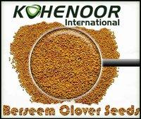 Berseem Clover Seeds (High Quality)