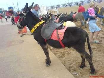 Donkey Saddles