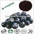 Super concentré biologique bleuets. 36:1 anti vieillissement antioxydant extrait