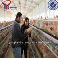 la exportación de aves vivas